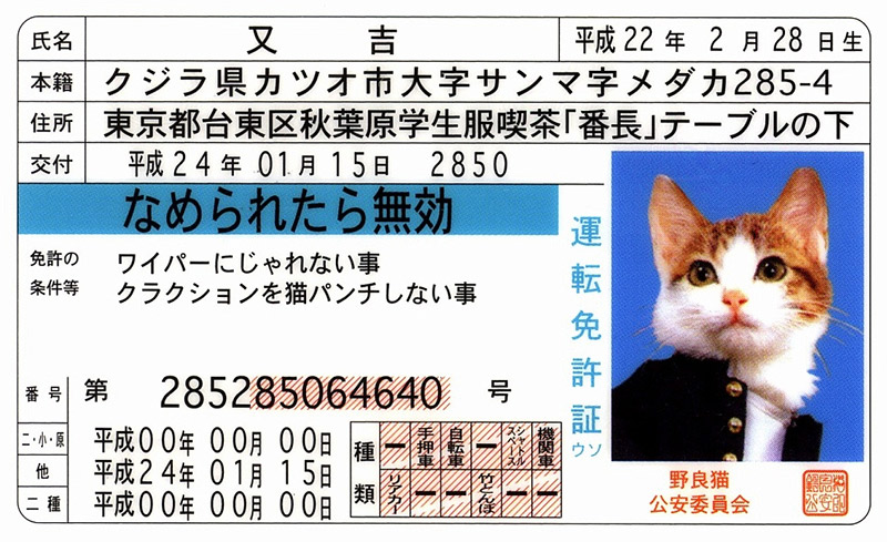 Japanese drivers license with picture of cat