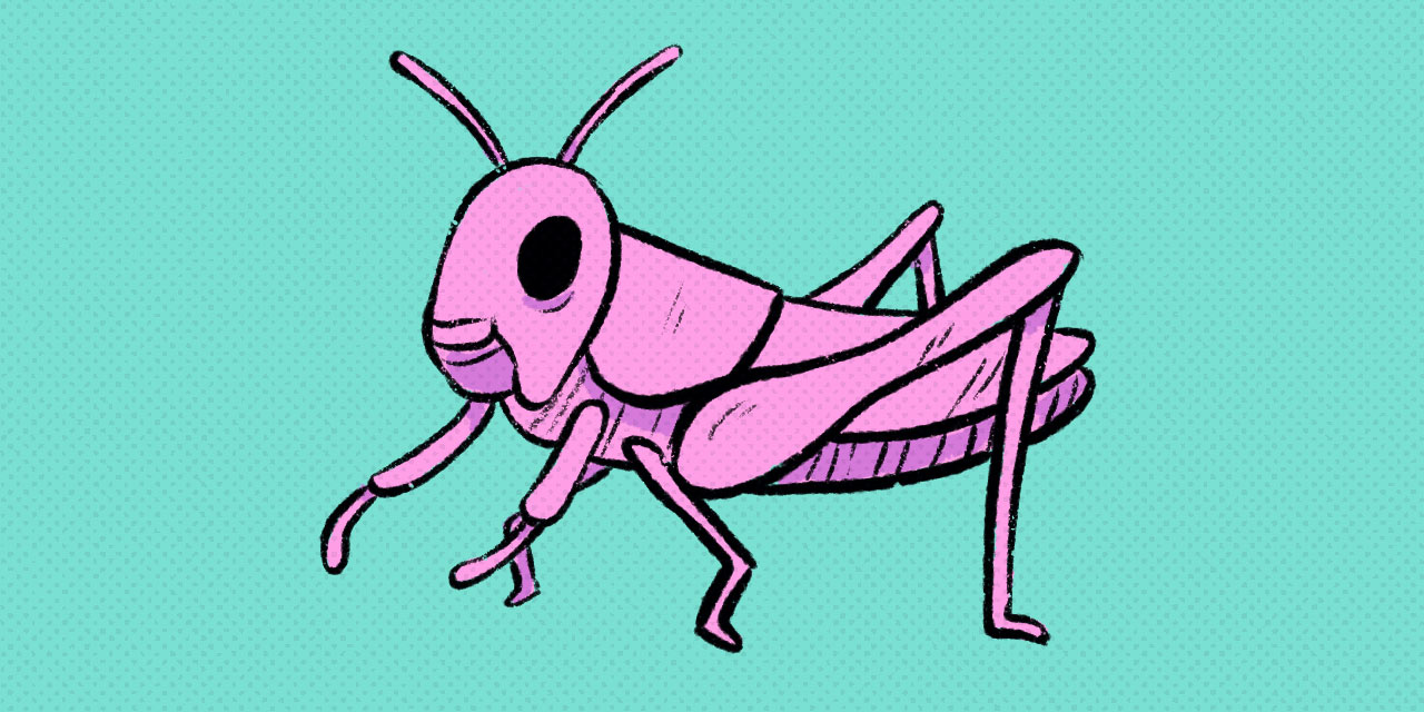 pink grasshopper on a teal background