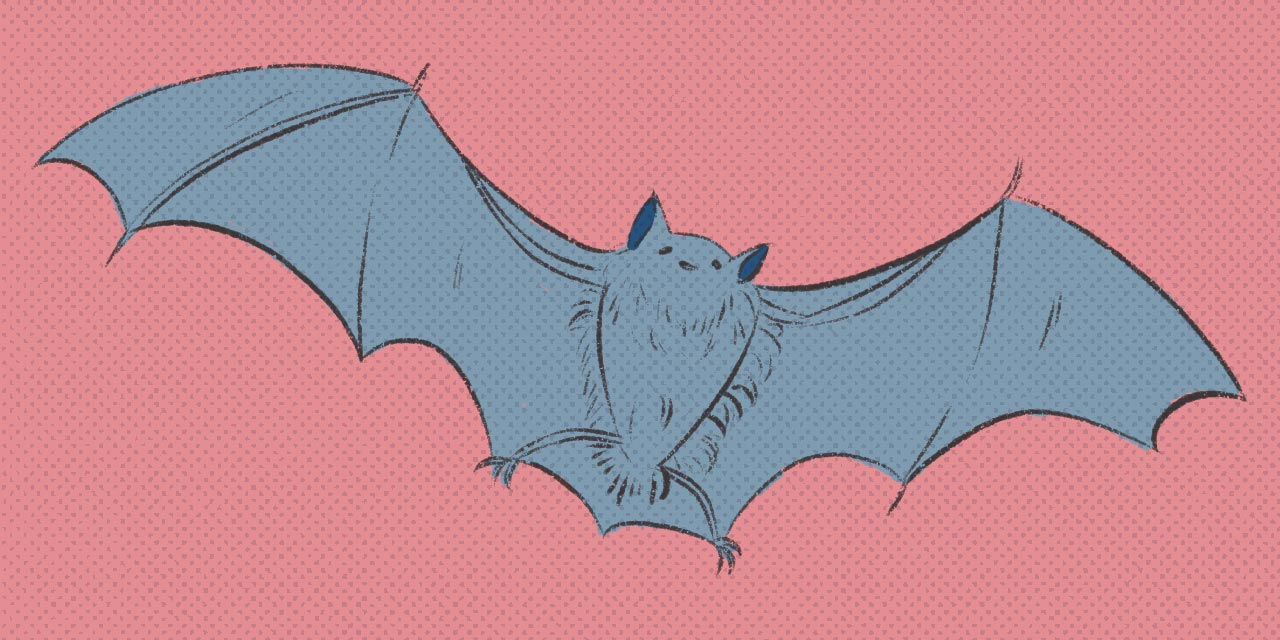 bat flying with wings spread