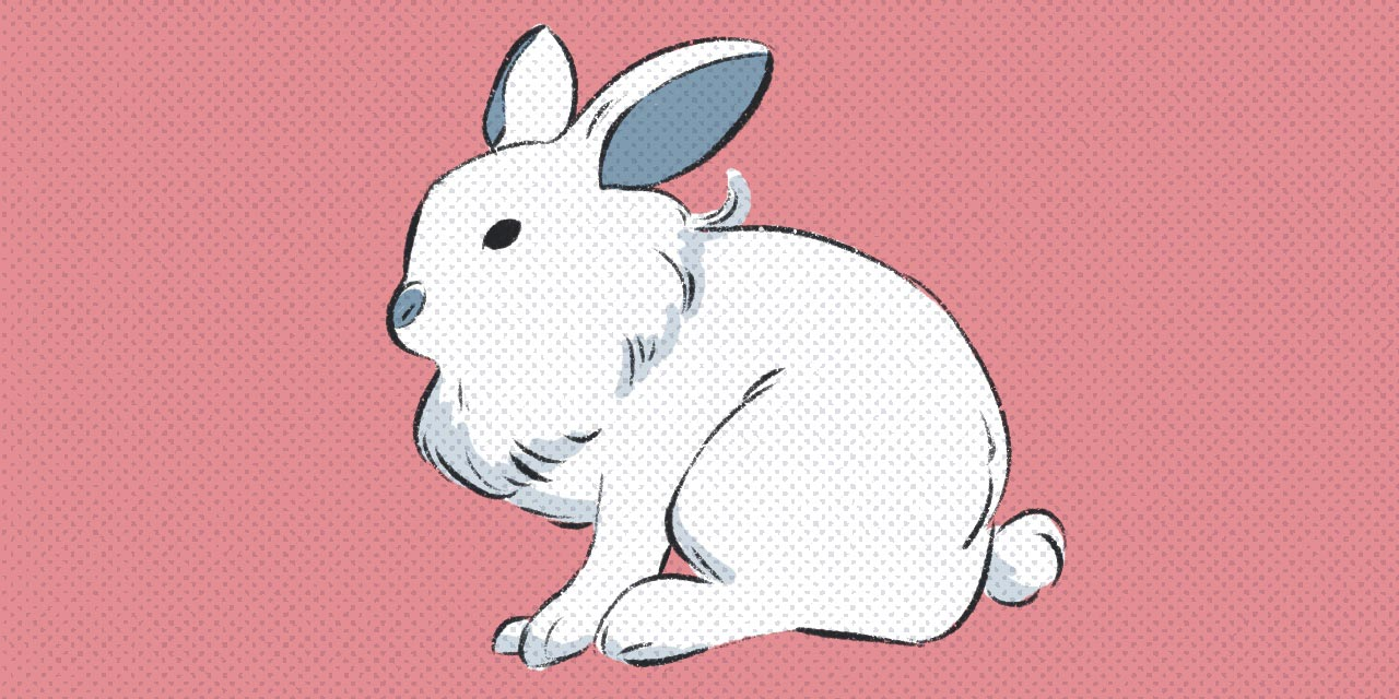 white rabbit sitting