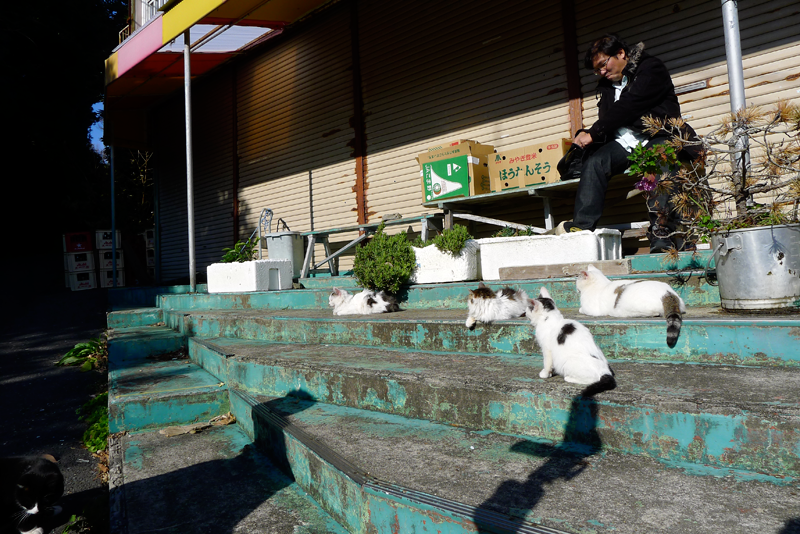 tashirojima store with 4 cats
