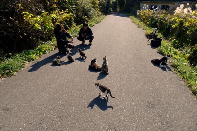 cats in the road and two people kneeling down
