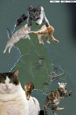 cats and kittens superimposed over picture of island map