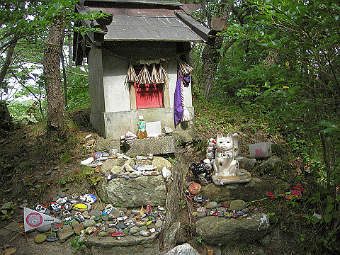 shrine for cats in woods