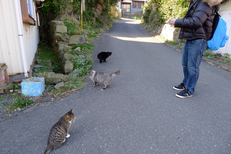 3 cats on tashirojima