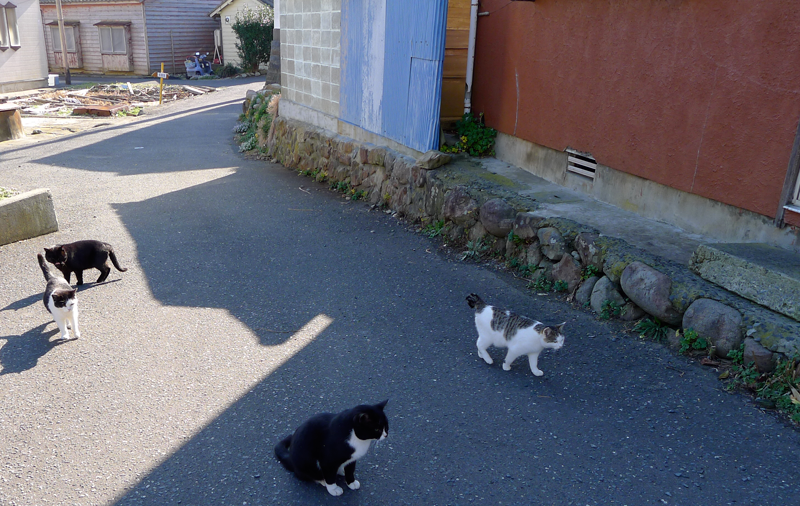 4 cats in an alley on cat island