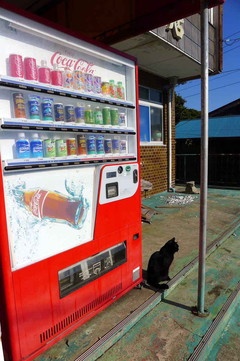 black cat near a vending machine in japan