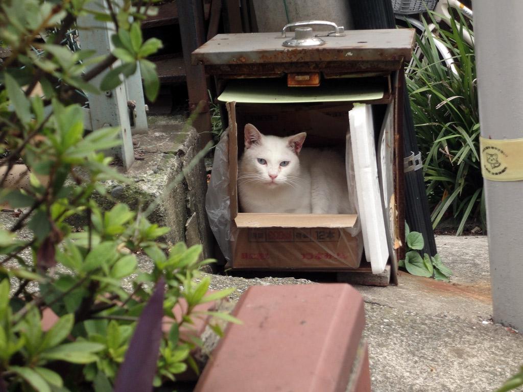white cat resting in box