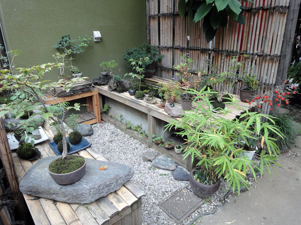 garden of potted plants