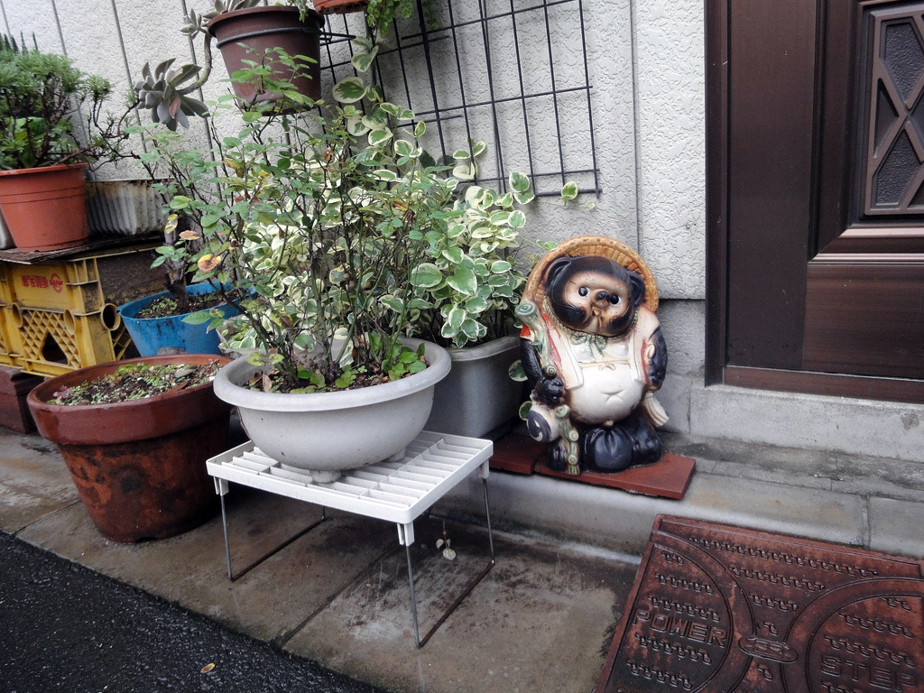 tanuki statue next to potted plant
