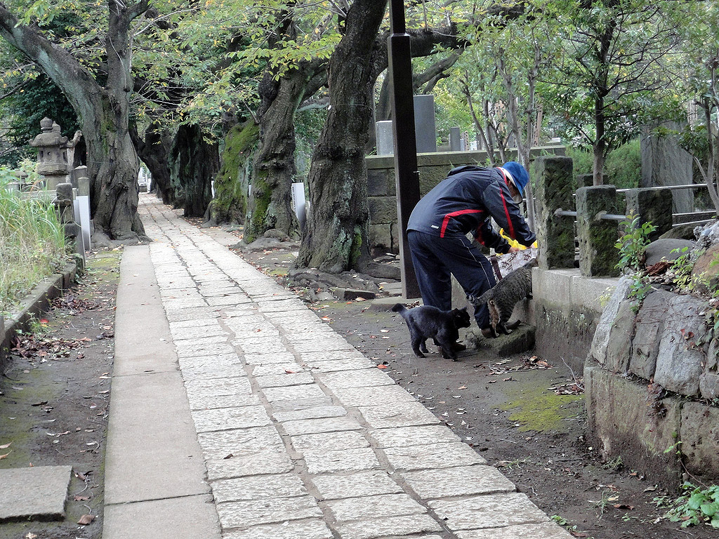 Japanese man bending down to feed cats