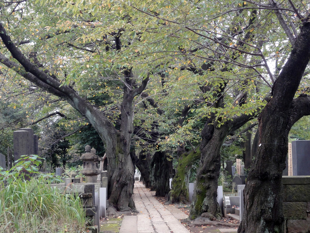 sidewalk lined with gnarled trees
