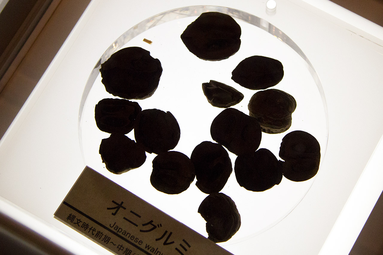 preserved walnuts on display in museum
