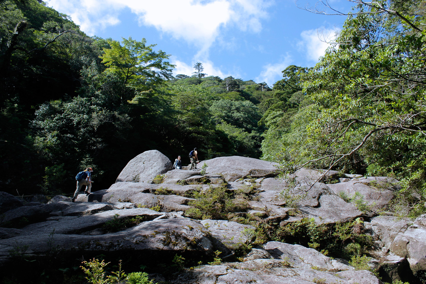 hiking on rocks in Japanese forest