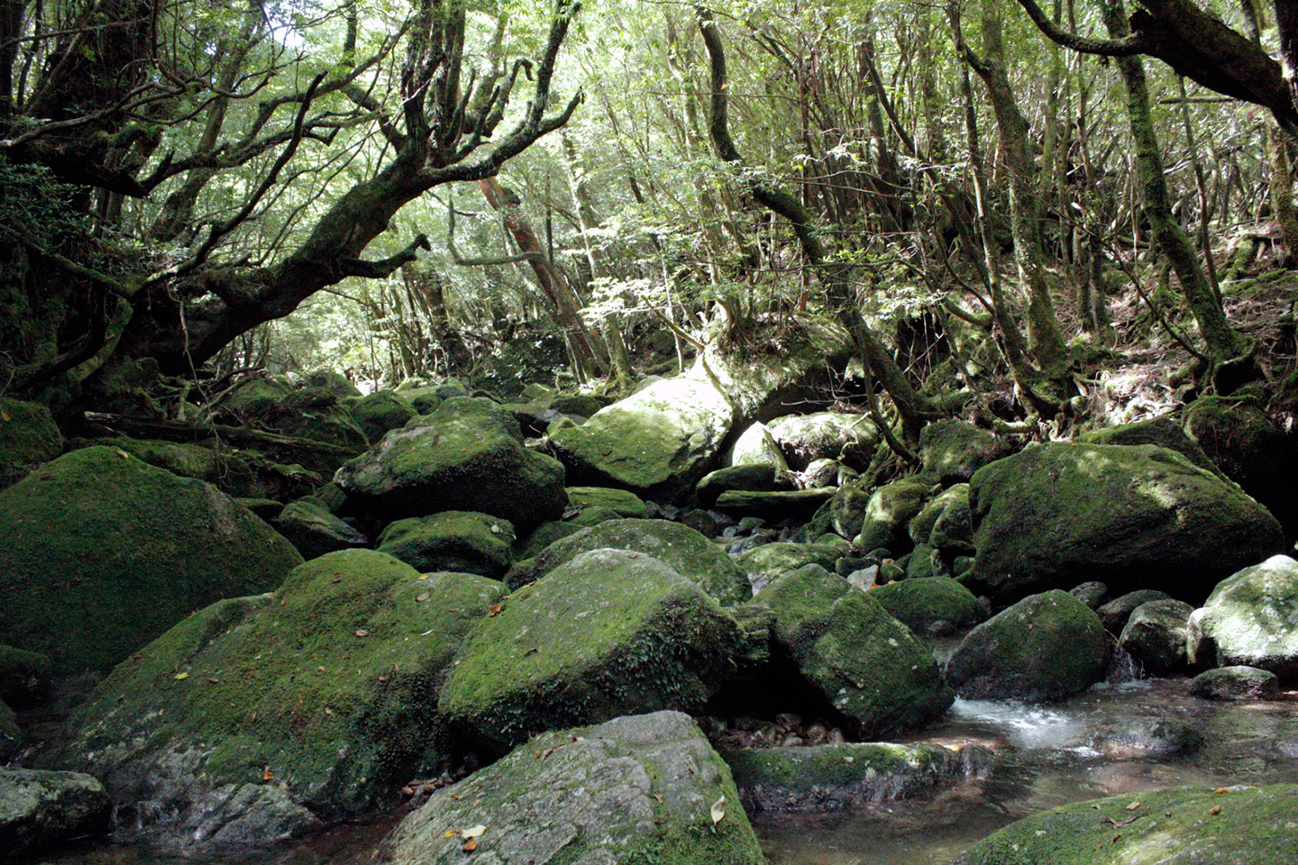 rocky stream bed in forest