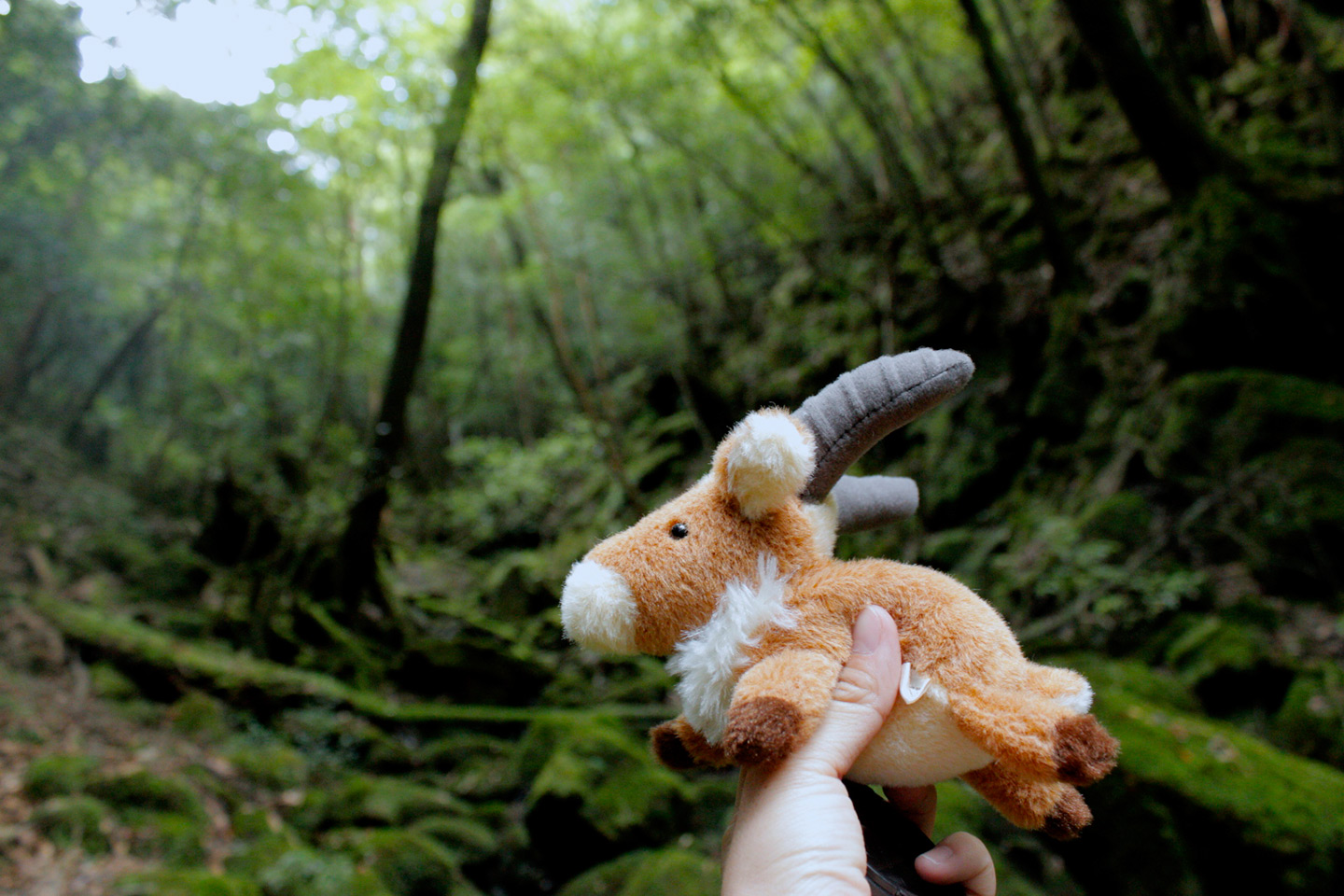 stuffed animal in forest