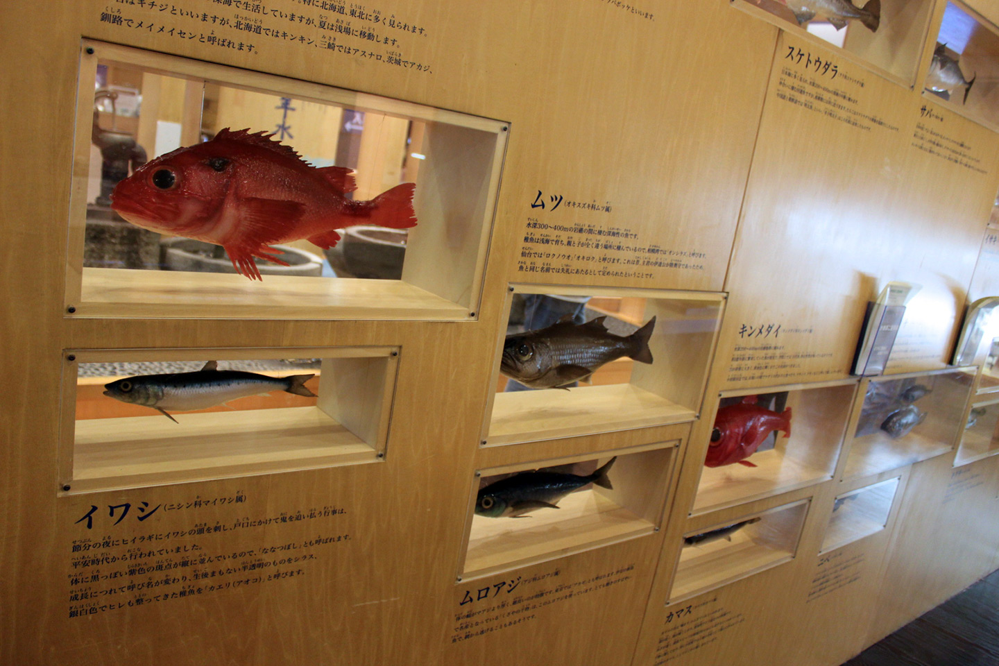 display of various fish used for kamaboko