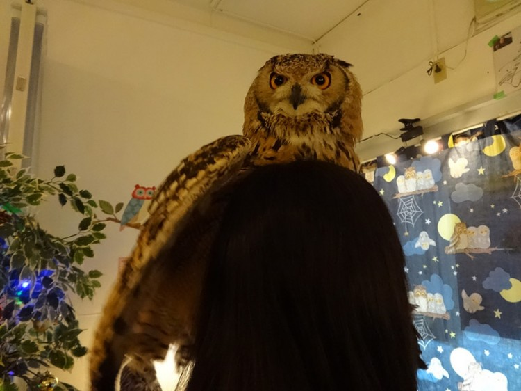fukuro no mise customer with great horned owl on head