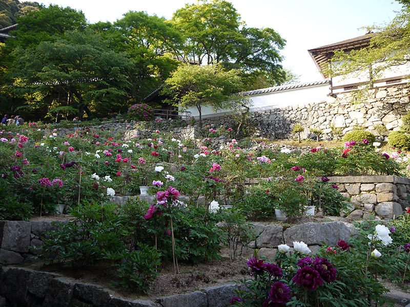 japanese shrine flower garden