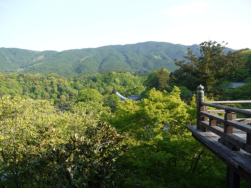 beautiful view green trees japan