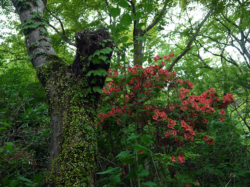 red flowers on a tree