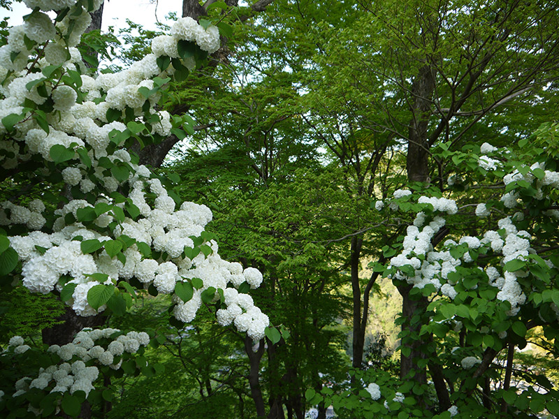 white flowers on a bush