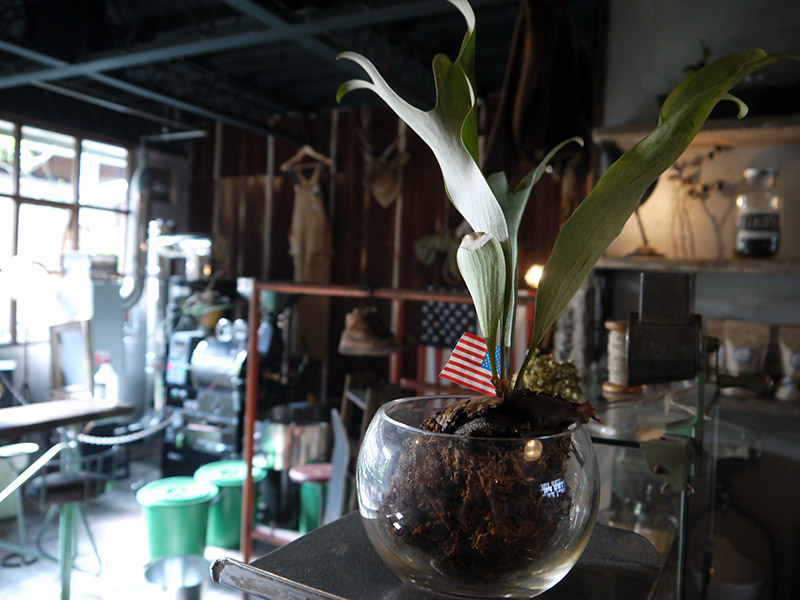 plant in a bowl with american flag clamp coffee kyoto
