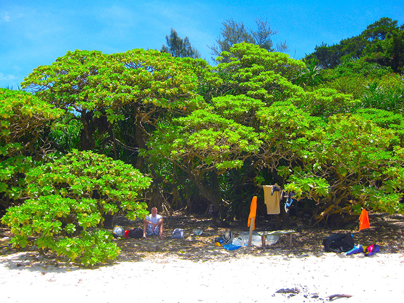 sandy aka island beach with trees and person sitting under them
