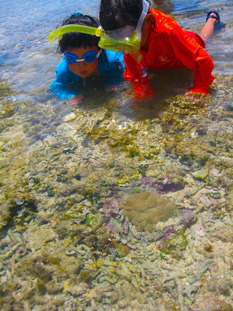 little kids in water wearing goggles looking at fish