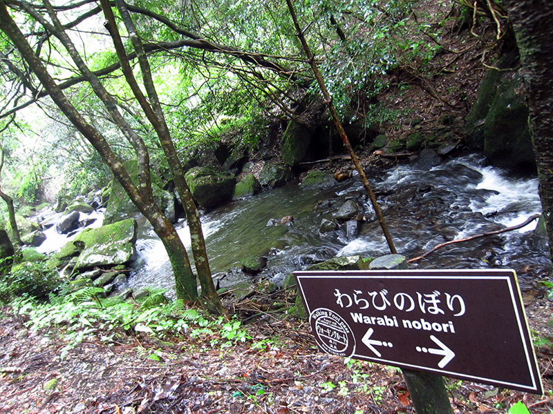 walking path and sign next to stream
