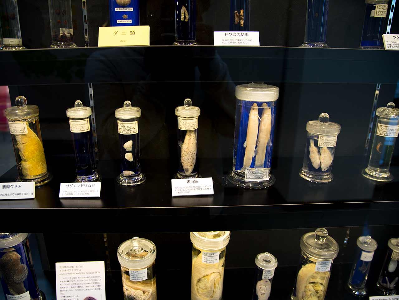 jars of parasites at tokyo parasite museum