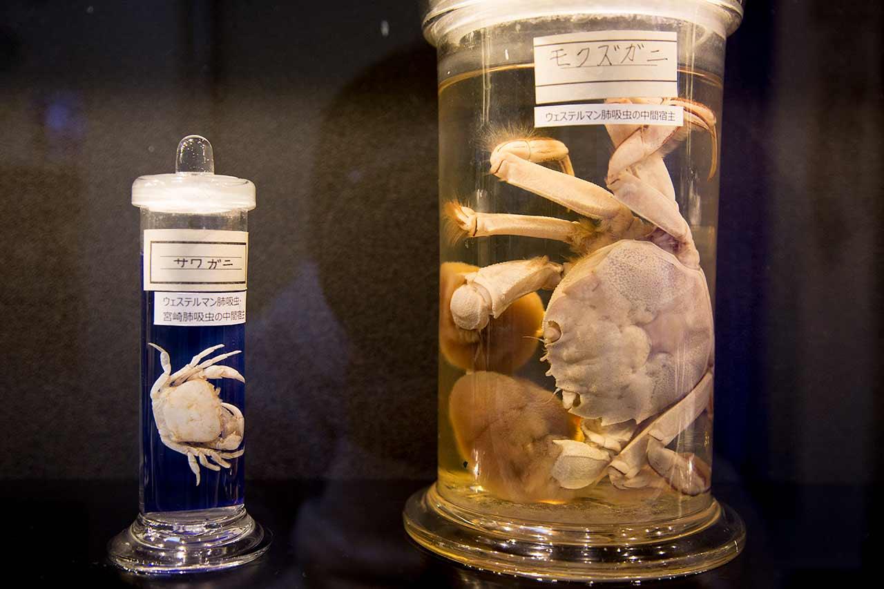 tokyo parasite museum exhibit