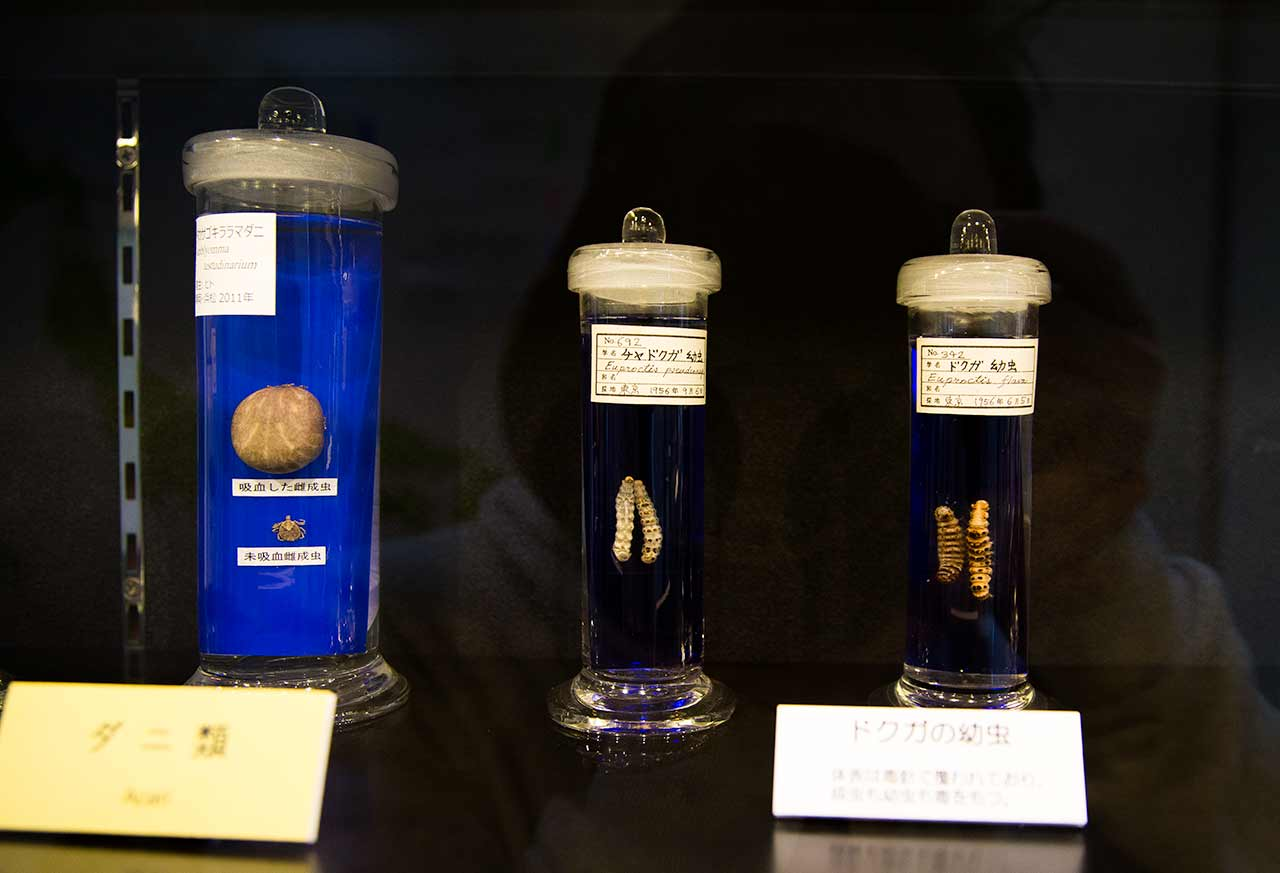 meguro parasitological museum exhibits