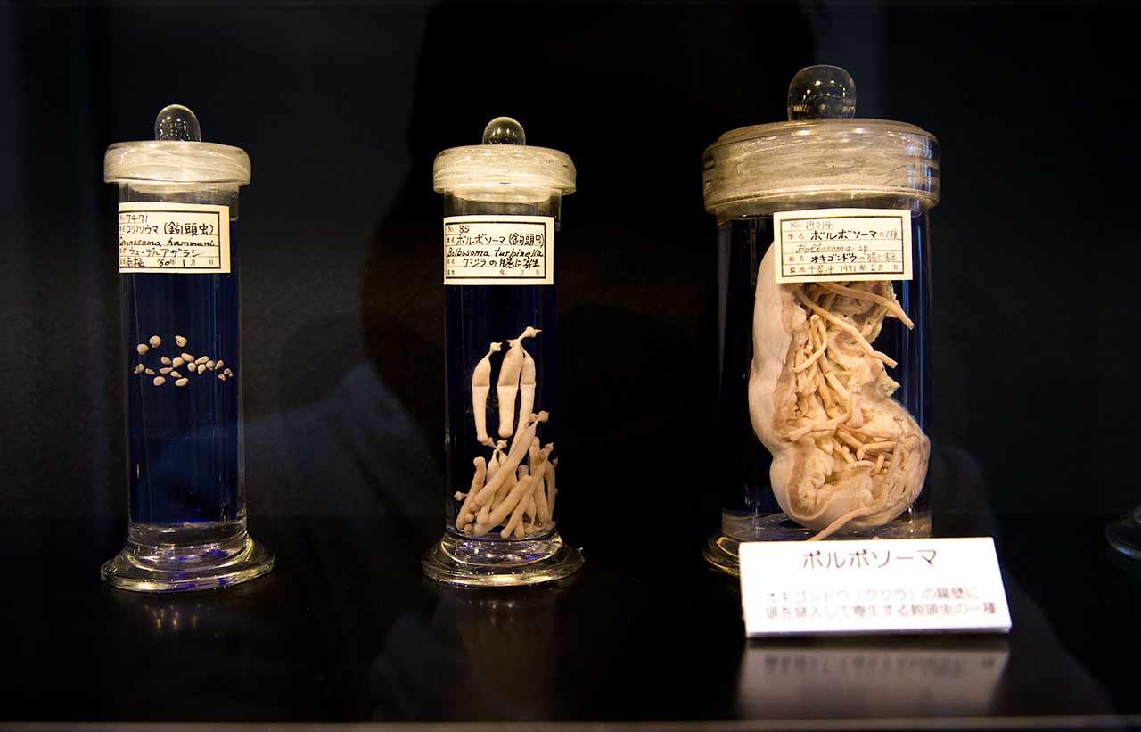 parasites in marked jars in meguro tokyo