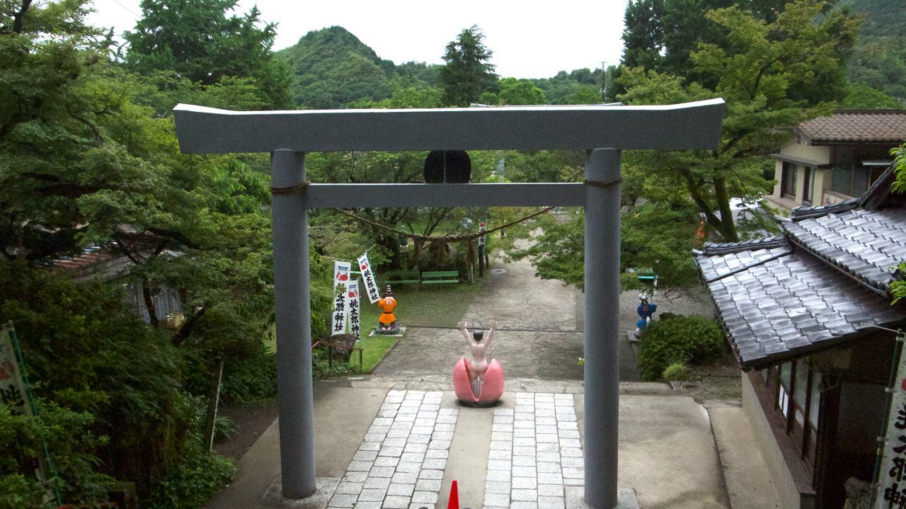momotaro torii