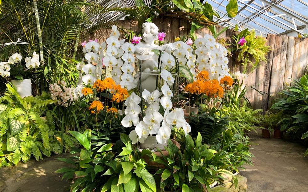 orchids surrounding a cherub statue